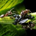 Mravenci na zahradě? Uvařte jim černou kávu!