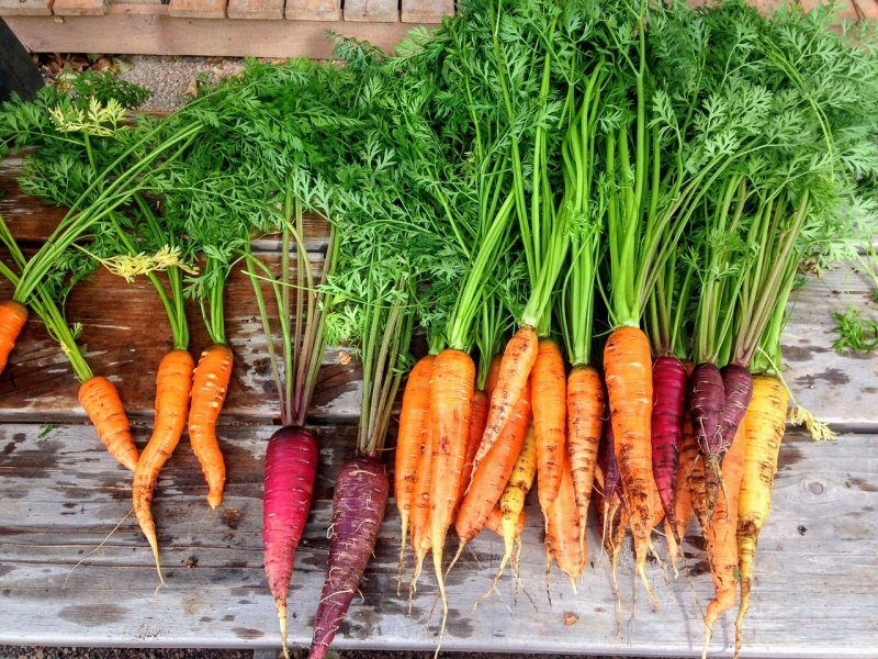 mrkev, zelenina, zahrada, zdraví,. vitaminy, minerály