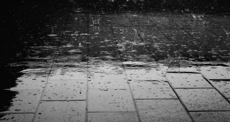 déšť, voda, dešťová voda, zahrádka, zalévání zahrádky, rostliny, zeleň