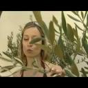 O pěstování středomořských dřevin u nás - video