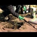 Péče o růže po zimě - video