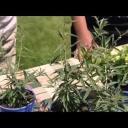 Pěstování a použití máty - video