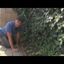 Popínavé rostliny - video