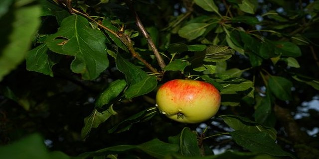 zahrada, říjen, podzim, jezírko, ovoce