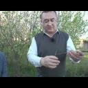 Roubování ovocných stromů - video