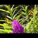 Rozkvetlá zahrada - video