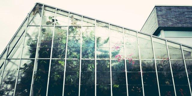 skleník, pěstování ovoce, zelenina, zahrada