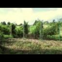 Školička - Zelené práce - video
