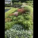 Trvalky v suchomilném trvalkovém záhonku - video