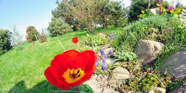 zahrada, skalka, zahradní nábytek, malá zahrada, údržba zahrady