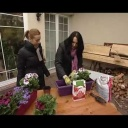 Výsadba balkonových květin - video