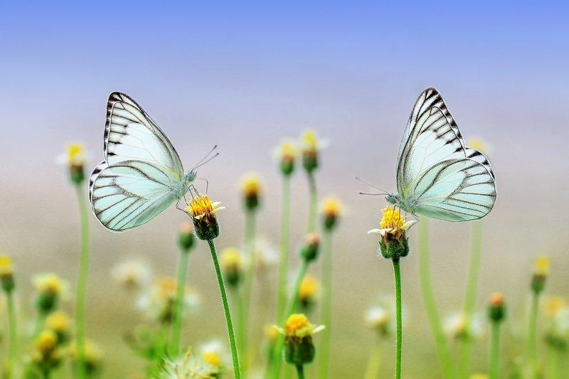 zahrada, údržba zahrady, relaxace, bezúdržbová zahrada, příroda, hmyz, plevel