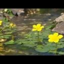 Zahradních jezírka a potůčky jejich budování - video