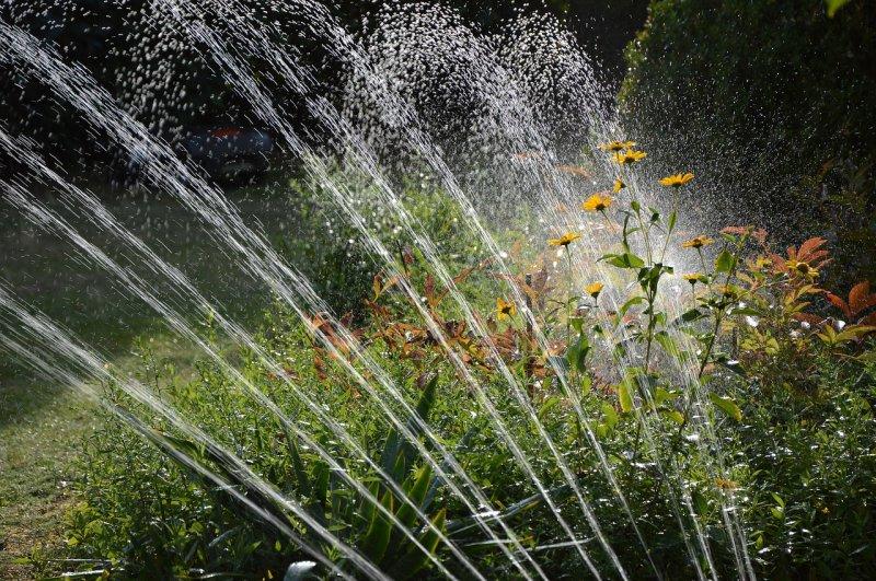 zahrada, zahrádkaření, zavlažování, voda, zeleň arostliny, zalévání zahrady