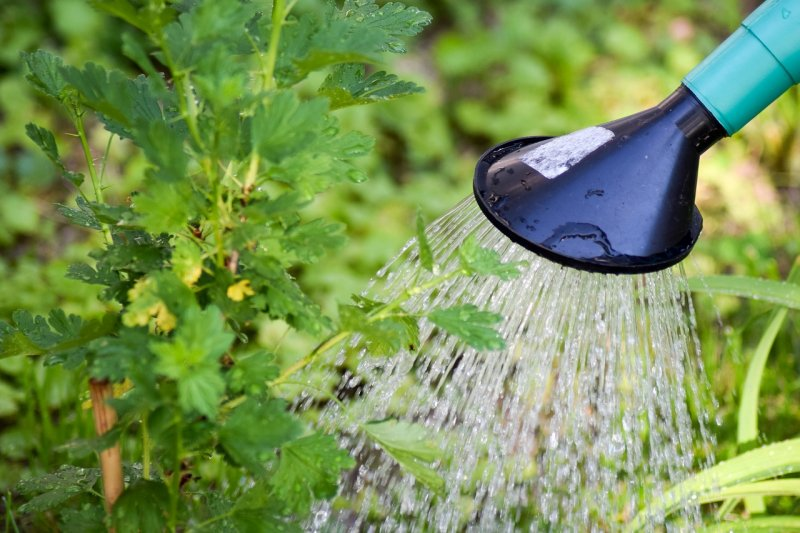 zeleň arostliny, stromy, keře, zalévání rostlin