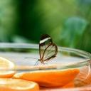 Chraňte potraviny a nápoje před hmyzem, ochráníte tím svoje zdraví!