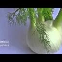 Fenykl: zelenina, koření i lék - video