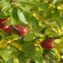 Ovoce na sváteční stůl rozhodně patří, ale volte raději pěstované v Čechách