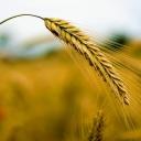 Potraviny dokáží prodloužit, ale i zkrátit život
