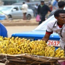 Proč kupujeme drahá domácí jablka a levné dovozové banány?