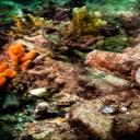 Zdraví a afrodiziaka z moře