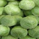 Zelí - zdravý přísun vitaminů