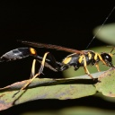 Bodnutí hmyzem u alergiků může vyvolat životu nebezpečnou reakci, jednejte rychle!