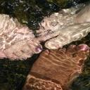 Bolest nohou je třeba odborně vyšetřit a léčit