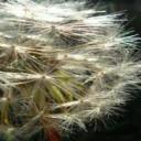Čistička vzduchu odstraňuje spouštěče alergií v místnostech