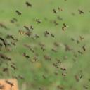 Nebezpečí bodnutí hmyzem lze účinně předcházet, ale v případě bodnutí je třeba jednat rychle!