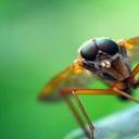 První pomoc při bodnutí hmyzem