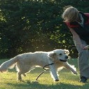 Agility - zdravý pohyb pro psa i pána