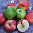 Jablečná dieta a detoxikační kúra zároveň, která trvá pouze tři dny