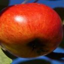 Jablečná dieta posílí zdraví a zbaví nadváhy