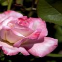 Jak se orientovat v mužích, aneb jak najít pravou lásku