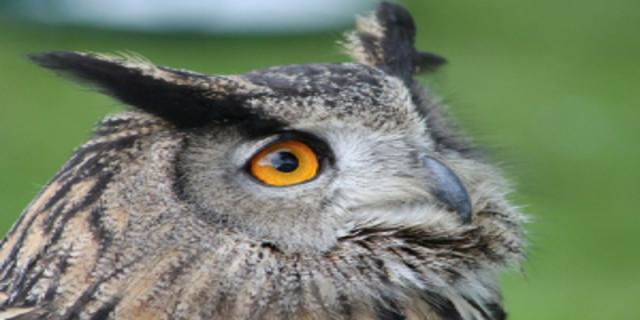 Zdravé oči - vitamíny, ale procházky vpřírodě, rozzáří váš zrak