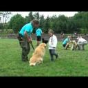Co všechno je potřeba při výcviku psa - video