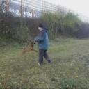 Dovádění psa s klackem - video