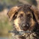 Historie psů - video