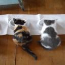 Kočky mají rády mléko, ale nedokáží ho strávit!