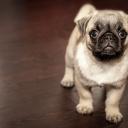 Pes není hračka a jeho příchod do rodiny s sebou nese určitá opatření