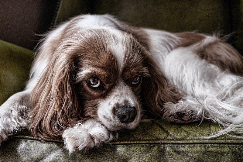pes, zvíře, veterinární ordinace