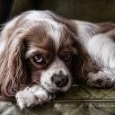 Pes v bytě má svůj specifický pach, ale pokud smrdí, je třeba navštívit veterináře!